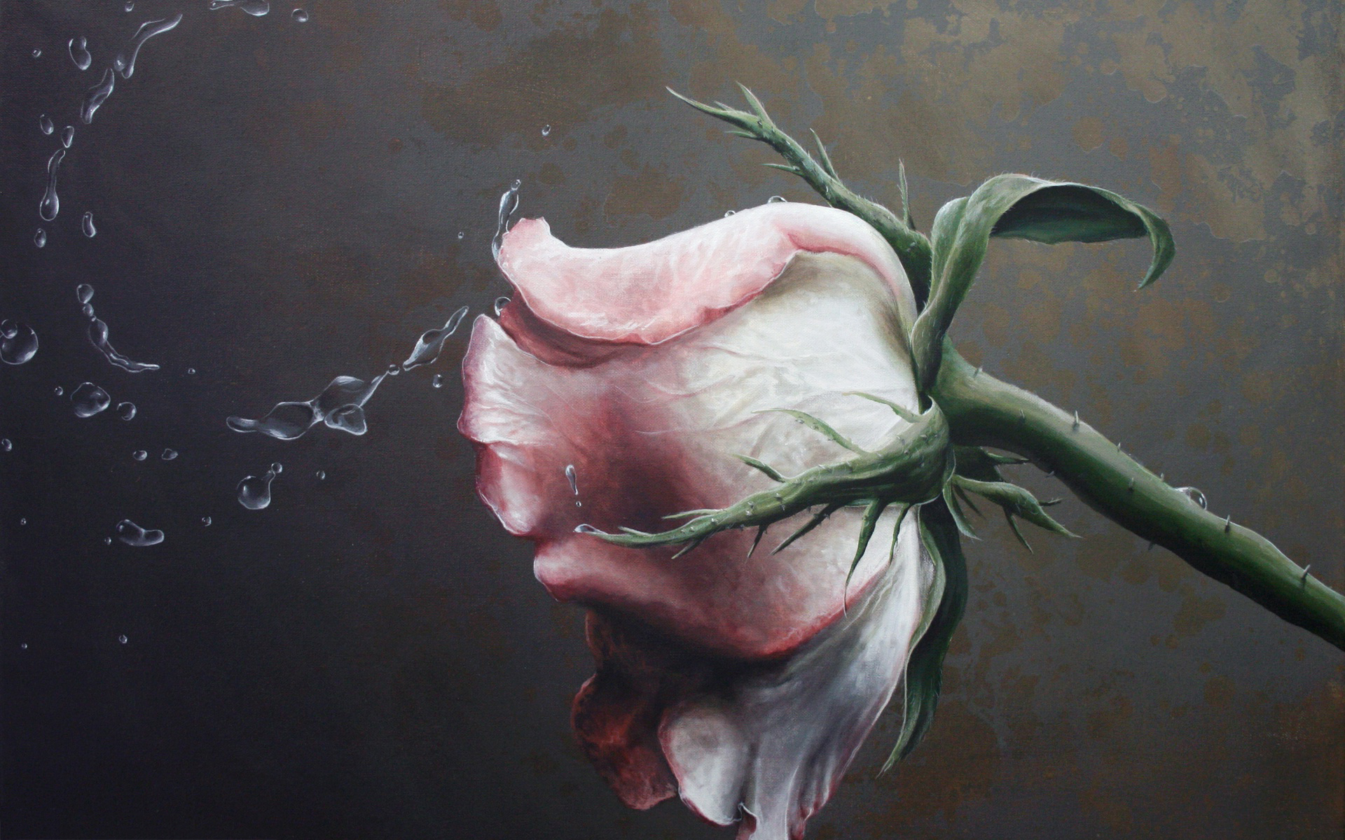 6951358-wet-rose-painting